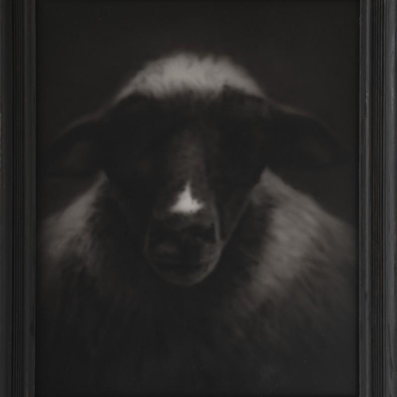 Spasené, 50x40cm, akral na plátne, 2012