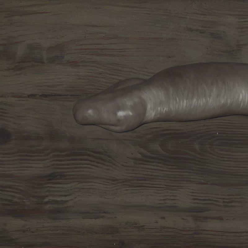 Had, 40x50cm, olej na plátne, 2015