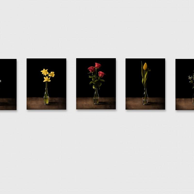 Kvety, 7x 70x54cm, olej na plátne, 2018