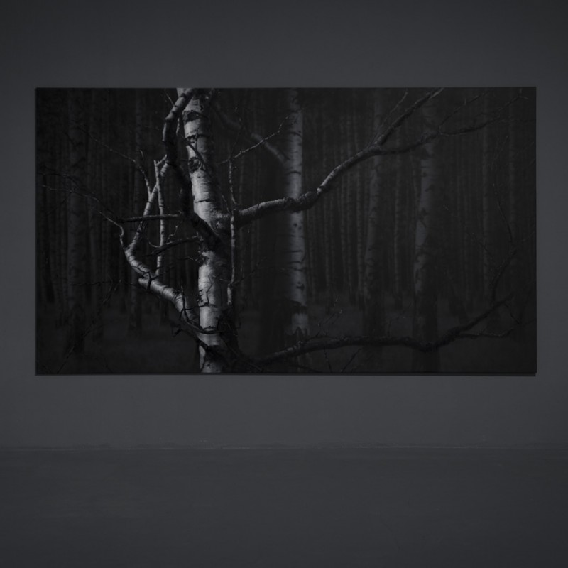 2019 Can't see forest for the trees, Soda Gallery, Bratislava